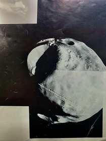 Original photo print of Phobos Oct  OFFICE OF PUBLIC INFORMATION JET PROPULSION LABORATORY CALIFORNIA INSTITUTE OF TECHNOLOGY NATIONAL AERONAUTICS AND SPACE ADMINISTRATION PASADENACALIFORNIATELEPHONE- Viking - P- Caption from back of print in comments