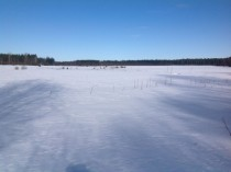 Our fields in Ostrobothnia Finland  x