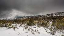 Out the back of Mt Wellington Tasmania  x