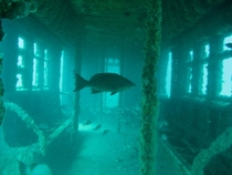 Over  retired MTA subway cars have been dumped into the Atlantic Ocean to create artificial reefs for fish