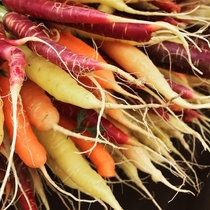 Over-Wintered Carrots Taste the Sweetest