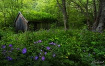 Overgrown An abandoned hut deep in the Norvegian forest near Sunndal  Photo by Haakon Nygaard