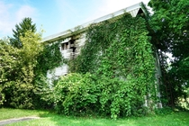Overgrown and abandoned house Splitting where the rain flows Lexington Ohio