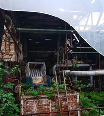 Overgrown factory in east Germany