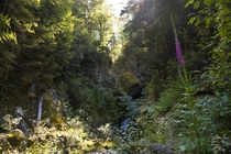Overgrown gorge in the middle of a wilderness - West Coast NZ