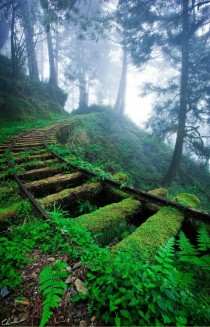 Overgrown Railroad tracks in Taipingshan National Forest in Taiwan