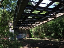 Overgrown railway bridge