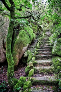 Overgrown staircase in Sintra Portugal  by Fotoaguado