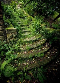 Overgrown steps abandoned since the s near the PigeonTower at Rivington Lancashire UK