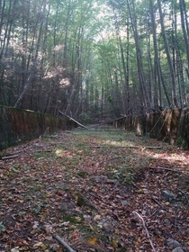 Overgrown structure at former Hingham Naval Ammunition Depot Annex