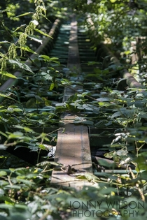Overgrown tracks of an old theme park - Camelot UK