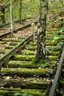 Overgrown Train Tracks Berlin Germany
