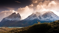 Overseer - a lone guanaco looks out at the majestic Cuernos del Paine in Chilean Patagonia  photograph by Gene Wahrlich