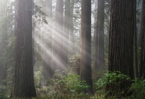 Overwhelming beauty in Redwoods State Park California USA