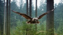 Owl in flight x-post from rOwls