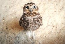 Owls are just so damn cute