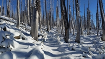 Pacific Crest Trail through a burnt forest after a fresh snow Oregon