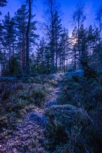 Paimio Finland - A path in a moonlit forest