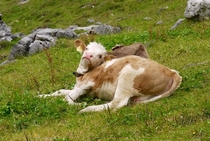 Paint me like one of your French Cows