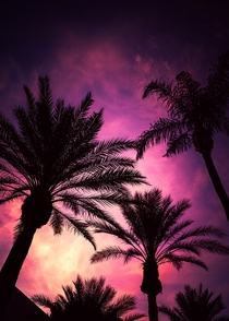 Palm tree silhouettes against an Arizona sunset