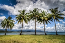 Palm Trees n Ocean Views Port Douglas Australia - by David Roma Photography