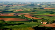Palouse Hills from Steptoe Butte Washington