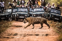Paparazzi and a Tiger