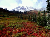 Paradise Meadow at Mt Rainier - Washington
