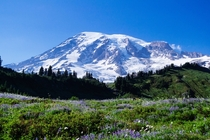 Paradise Mt Rainier Washington