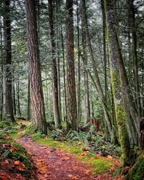 Path in Stimpson Nature Reserve Bellingham Washington
