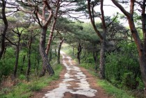 path through trees on the outskirts of Andong South Korea