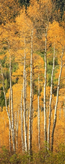Peak Color Aspen Grove Marble Colorado   x  px