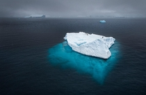 Penguins adrift on an iceberg during a heavy snow storm in Antarctica Joshua Holko