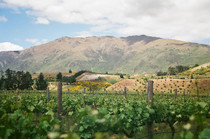 Peregrine Winery near Queenstown New Zealand Shot on mm film Nov
