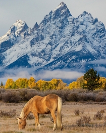 Perfectly Lonely Grand Teton National Park Wyoming