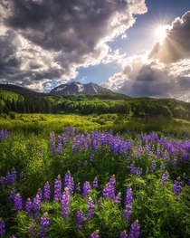 Perfectly Placed Sun Rays Kebler Pass Colorado