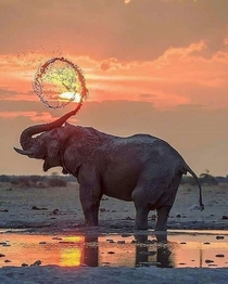 Perfectly timed photo of an elephant