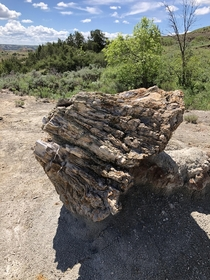Petrified Tree Stump in TR Natl Park ND