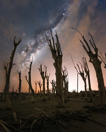 Petrified trees and the Milkyway