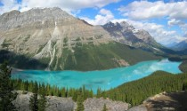 Peyto Lake Banff National Park  x