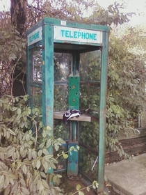 Phone booth Garrison New York - its surprising how rare it is to find an abandoned one