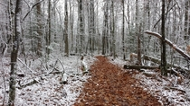 Pickett State Park trail after a snowy night