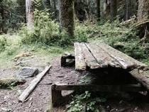 Picnic table on East Fork Quinalt River Trail WA