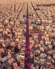 Pink road in Athens