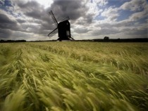 Pitstone Windmill and Blowing Grasses Bucks England