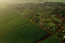 Plantations and small farms outside Maputo