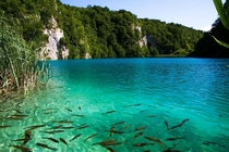 Plitvice Lakes Croatia  Went there with high expectations wasnt disappointed
