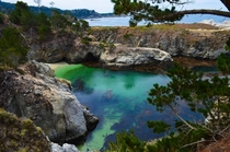 Point Lobos - Carmel CA