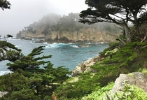 Point Lobos in California
