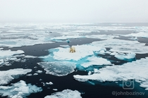 Polar Bear on melting sea ice  North